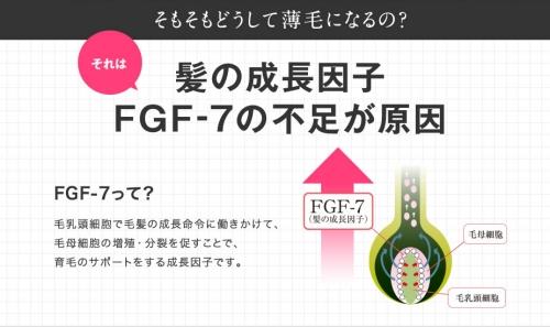 髪の成長因子 FGF-7